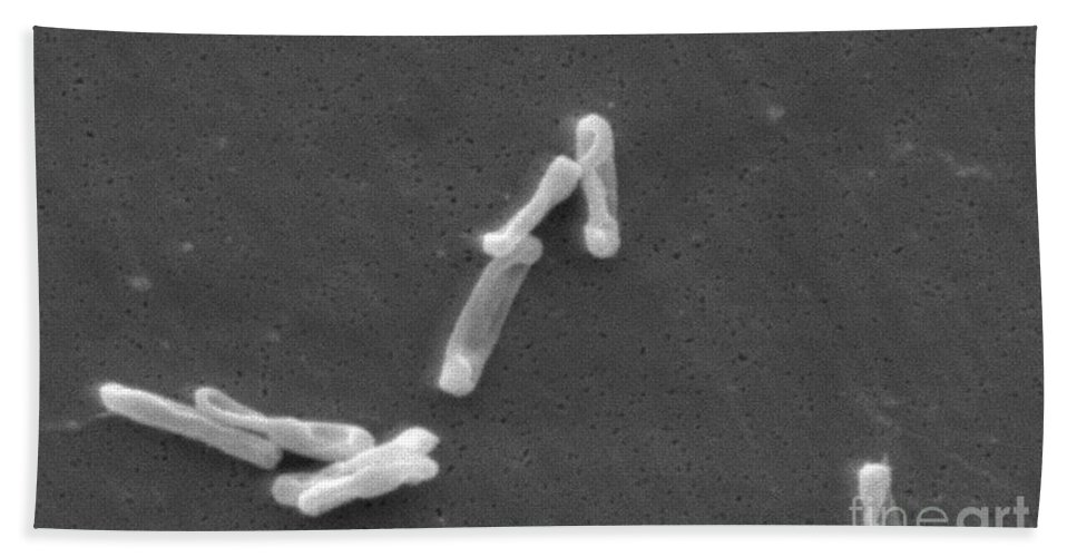 Science Hand Towel featuring the photograph Clostridium Difficile Bacteria, Sem by Science Source