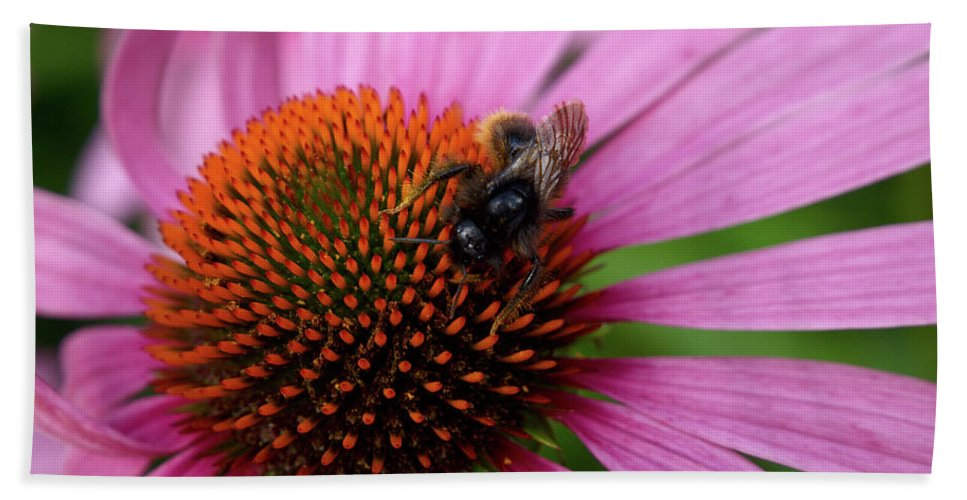 Jouko Lehto Bath Sheet featuring the photograph Eastern Purple Coneflower by Jouko Lehto