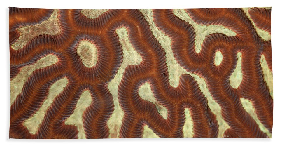 Animal Hand Towel featuring the photograph Fluorescent Coral In White Light by Ted Kinsman