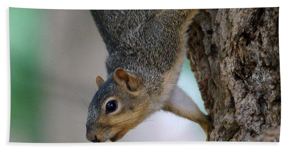 Squirrel Bath Sheet featuring the photograph Hanging Around by Lori Tordsen