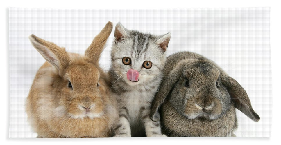 Nature Hand Towel featuring the photograph Kitten And Rabbits by Mark Taylor