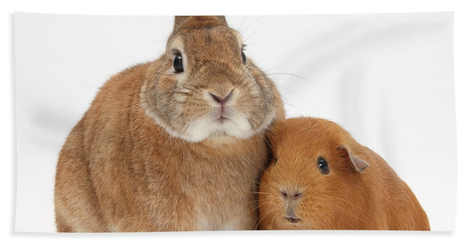 Nature Hand Towel featuring the Rabbit And Guinea Pig by Mark Taylor