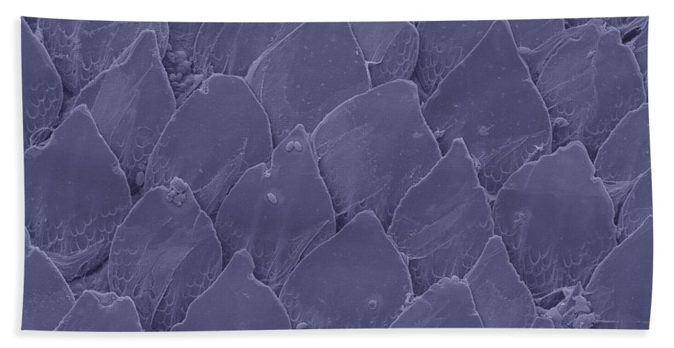 Sem Hand Towel featuring the photograph Shark Skin, Sem by Ted Kinsman