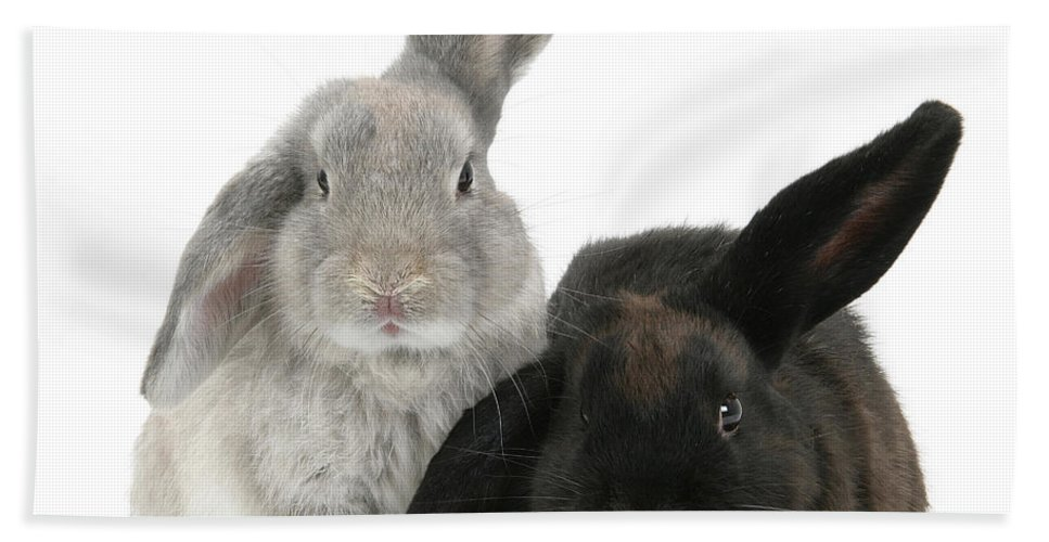 Animal Hand Towel featuring the photograph Two Rabbits by Mark Taylor