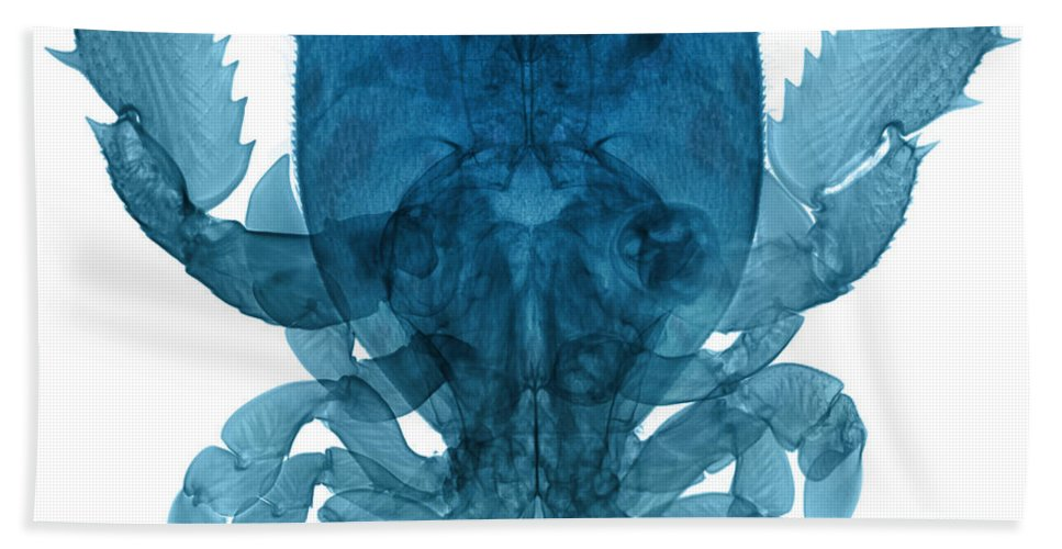 Xray Hand Towel featuring the photograph X-ray Of Deep Water Crab by Ted Kinsman