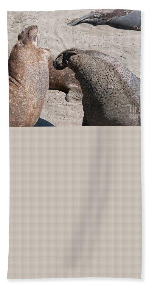 Animals Bath Sheet featuring the digital art Elephant Seal Colony On Big Sur by Carol Ailles