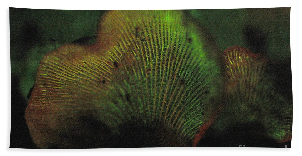 Luminescent Hand Towel featuring the photograph Luminescent Mushroom Panellus Stipticus by Ted Kinsman
