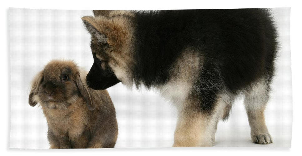 Animal Hand Towel featuring the photograph Puppy And Rabbit by Mark Taylor