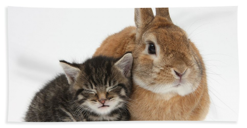 Nature Hand Towel featuring the photograph Rabbit And Kitten by Mark Taylor