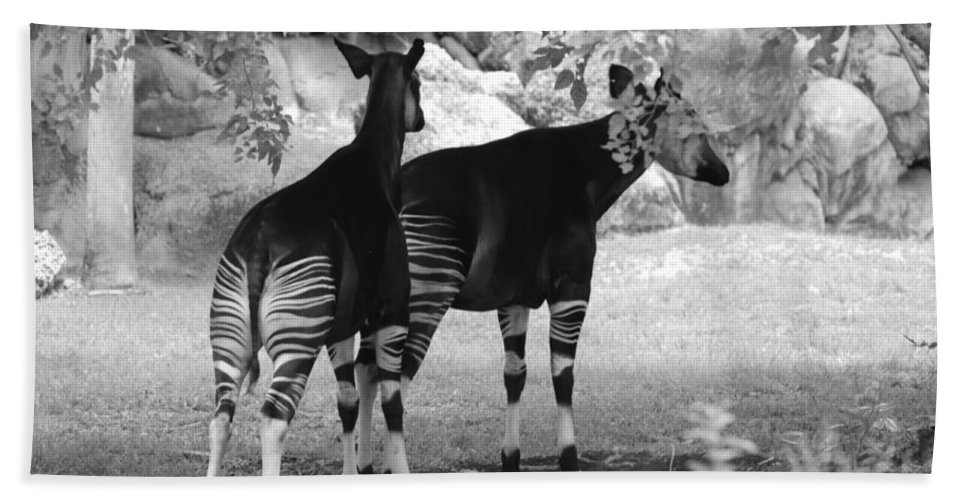 Animal Hand Towel featuring the photograph Two Stripes by Rob Hans