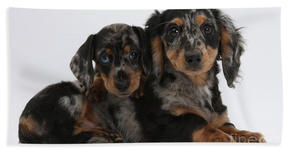 Dog Hand Towel featuring the photograph Dachshund Pups by Mark Taylor