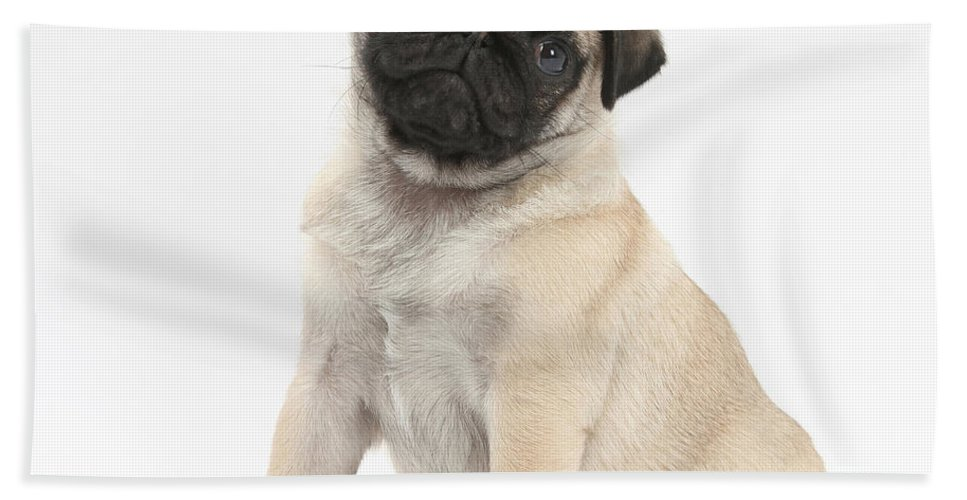 Dog Hand Towel featuring the photograph Fawn Pug Pup by Mark Taylor