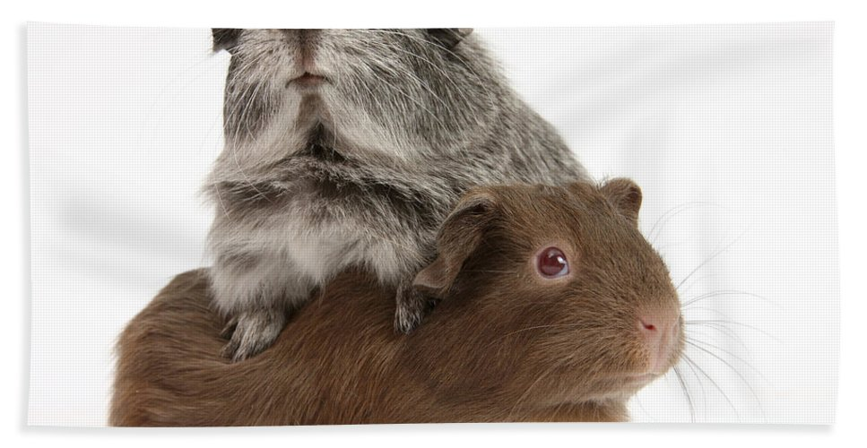 Animal Hand Towel featuring the photograph Guinea Pigs by Mark Taylor