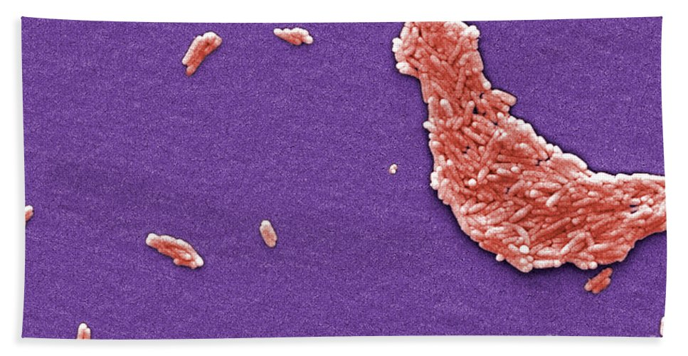 Science Hand Towel featuring the photograph Salmonella, Sem by Science Source