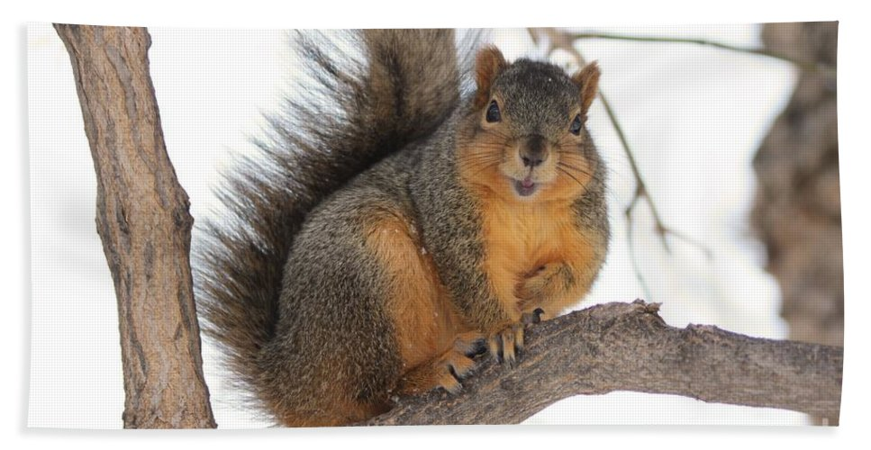 Squirrel Hand Towel featuring the photograph Squirrel by Lori Tordsen