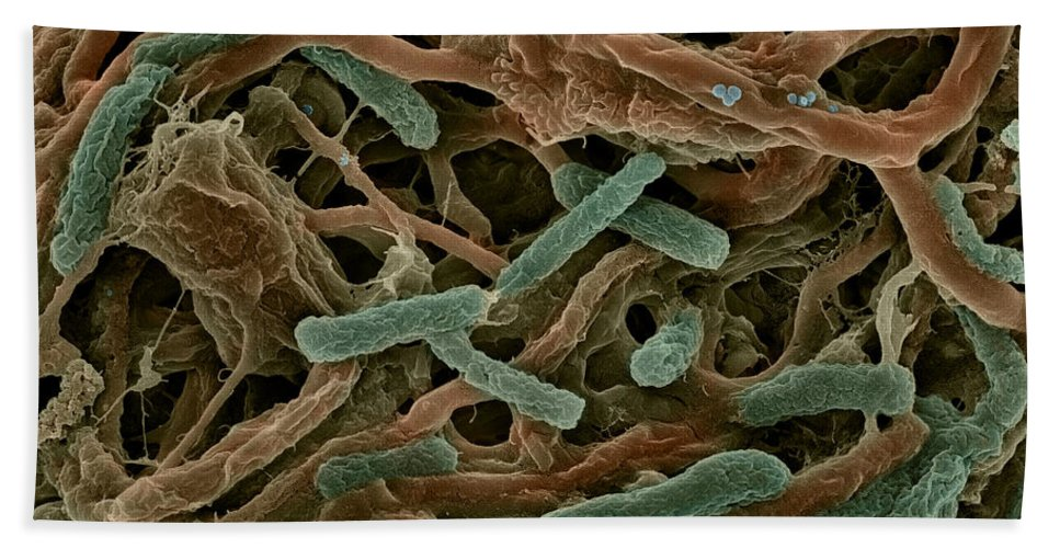 Bacteria Hand Towel featuring the photograph Thermophile Bacteria by Ted Kinsman