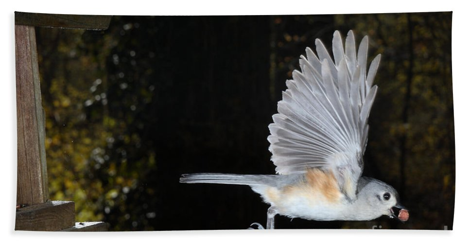 Tufted Titmouse Hand Towel featuring the photograph Tufted Titmouse In Flight by Ted Kinsman