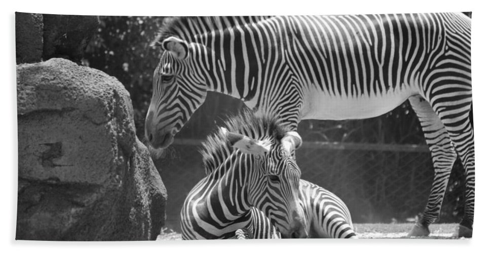 Animal Bath Sheet featuring the photograph Zebras In Black And White by Rob Hans