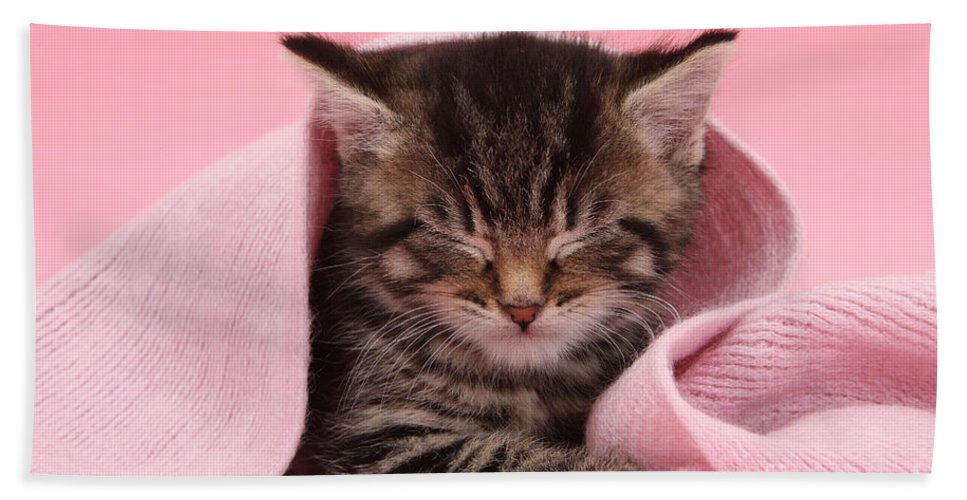 Nature Hand Towel featuring the photograph Tabby Kitten by Mark Taylor