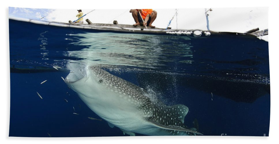 Day Hand Towel featuring the photograph Whale Shark Feeding Under Fishing by Steve Jones