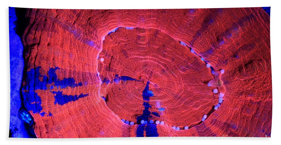 Animal Hand Towel featuring the photograph Fluorescent Coral In Uv Light by Ted Kinsman