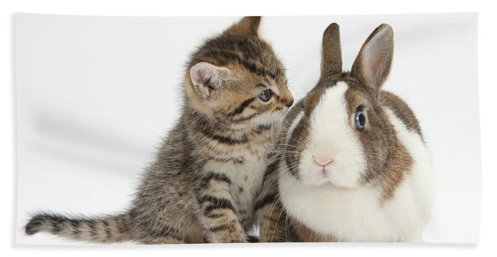 Nature Hand Towel featuring the photograph Kitten And Rabbit by Mark Taylor