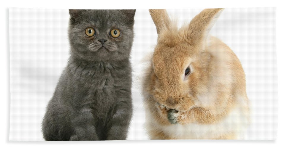 Nature Hand Towel featuring the Kitten And Rabbit by Mark Taylor
