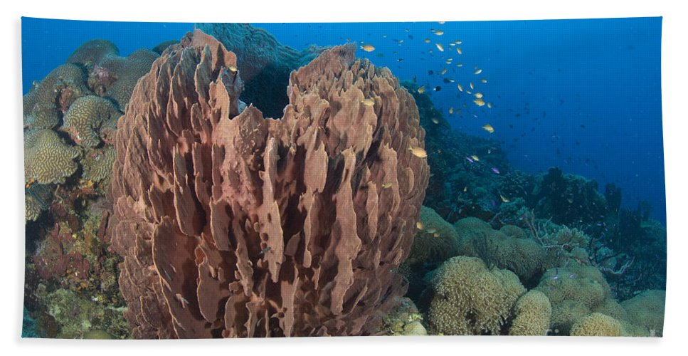 Demospongiae Bath Sheet featuring the photograph A Barrel Sponge Attached To A Reef by Steve Jones