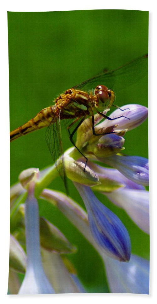 Dragonflies Hand Towel featuring the photograph A Beauty On A Beauty by Ben Upham III