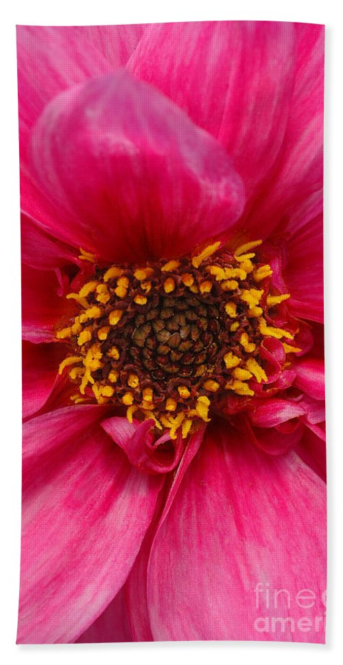Big Bath Sheet featuring the photograph A Big Pink Flower by Mike Nellums