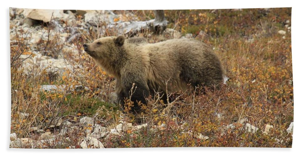Grizzly Bear Bath Towel featuring the photograph A Breath Of Fresh Air by Adam Jewell