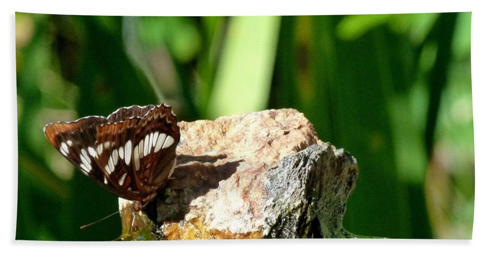 Butterfly Bath Sheet featuring the photograph A Butterfly Enjoys A Drink by Will Borden