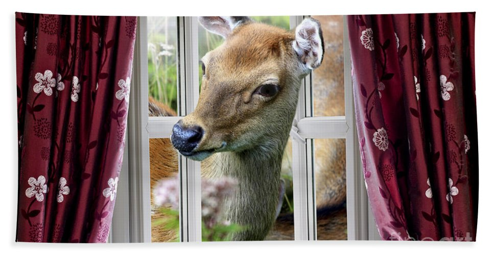 Deer Hand Towel featuring the photograph A Deer Enters The House Window. by Simon Bratt Photography LRPS
