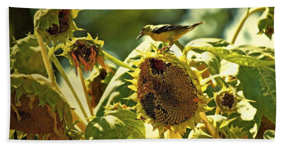 Sunflower Bath Sheet featuring the photograph A Feast For Some ... by Gwyn Newcombe