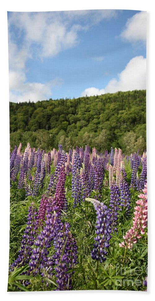 Nature Hand Towel featuring the photograph A Field Of Lupins by Ted Kinsman