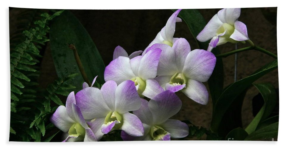 Orchids Bath Sheet featuring the photograph A Flight Of Orchids by Byron Varvarigos