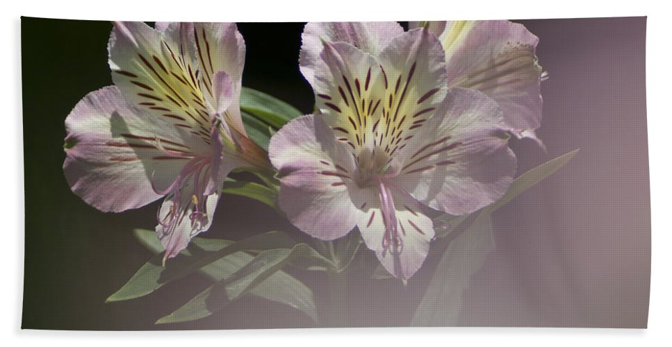 Nature Bath Sheet featuring the photograph A Hint Of Rose by Heiko Koehrer-Wagner