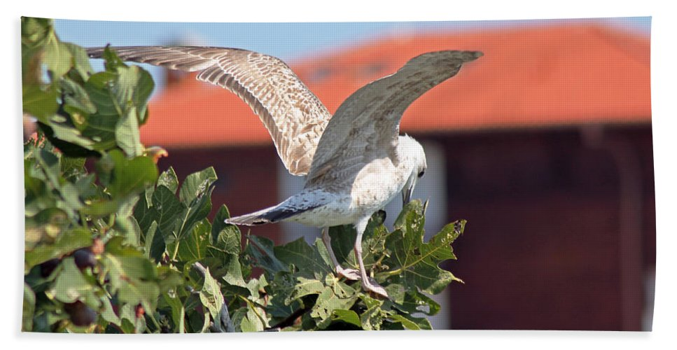 Gull Hand Towel featuring the photograph A Juvenile Herring Gull by Tony Murtagh