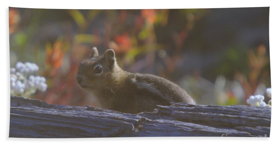 Chipmunks Hand Towel featuring the photograph A Little Chipmunk by Jeff Swan