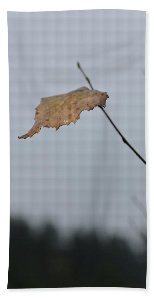 Autumn Bath Sheet featuring the photograph A Lonely Leaf by Michael Goyberg