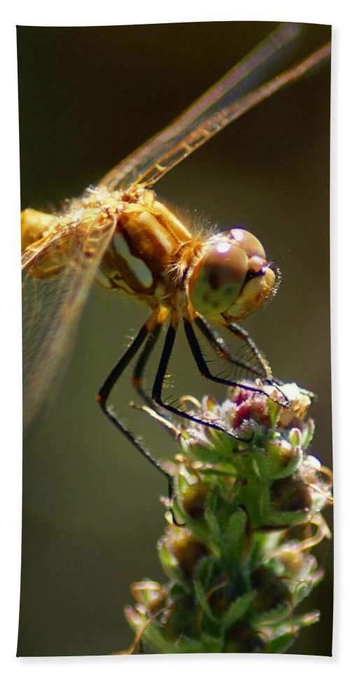 Dragonflies Hand Towel featuring the photograph A Moment In Time by Ben Upham III