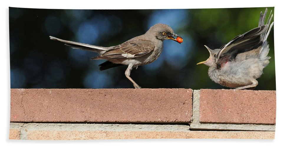Birds Bath Towel featuring the photograph A Mothers Work Is Never Done by Lynn Bauer