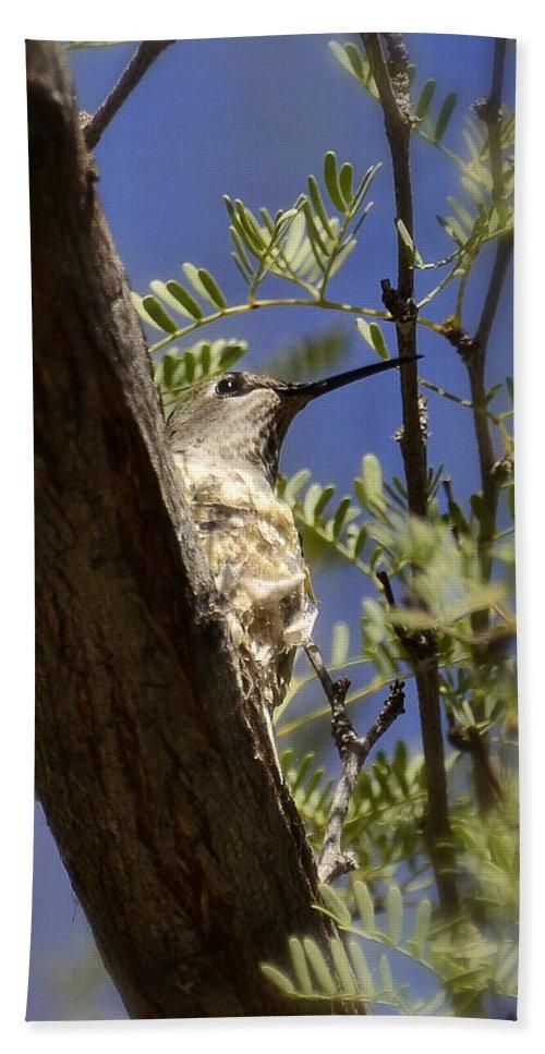 Hummingbird Bath Sheet featuring the photograph A Nesting Hummingbird by Saija Lehtonen