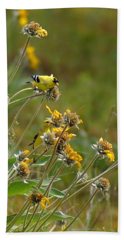 Goldfinches Bath Sheet featuring the photograph A Pair Of Goldfinches In Spokane by Ben Upham III