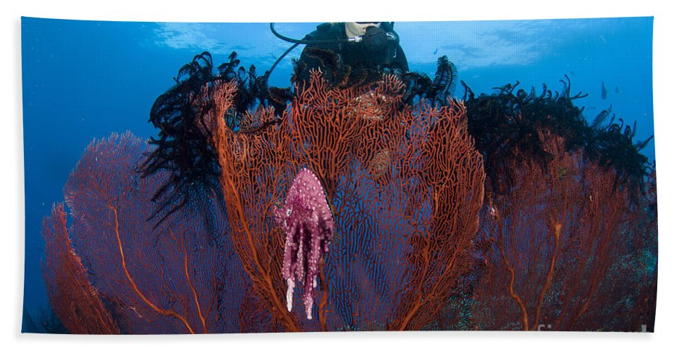 Anthozoa Bath Sheet featuring the photograph A Red Sea Fan With Sponge Colored Clam by Steve Jones