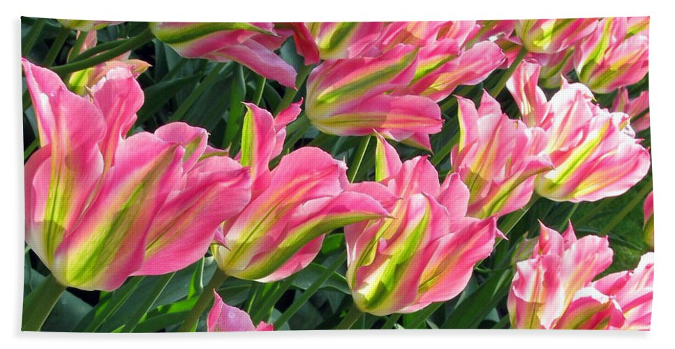 Tulip Fields Hand Towel featuring the photograph A Sea Of Pink Tulips. Square Format by Ausra Huntington nee Paulauskaite