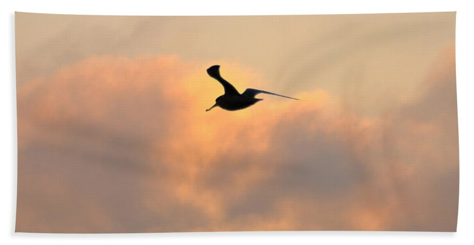 Seagull Bath Sheet featuring the photograph A Seagull Takes Flight by Bill Cannon