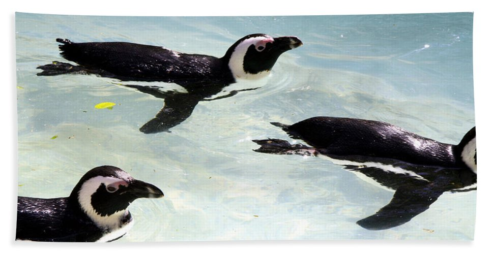 Penguins Hand Towel featuring the photograph A Small Squadron Of Swimming Penguins by Heather Lennox