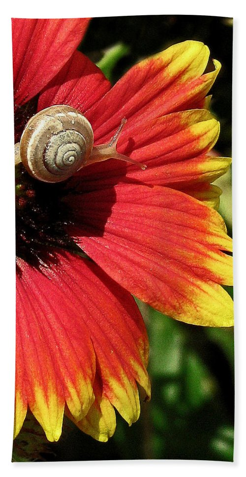 Nature Bath Sheet featuring the photograph A Snail's Pace by Peg Urban