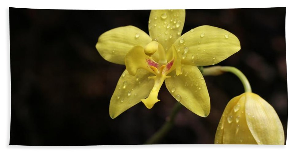 Orchid Hand Towel featuring the photograph A Star Is Born by Sabrina L Ryan